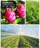 植物生長補光燈,室內大棚,多肉花卉,大棚蔬菜補光燈