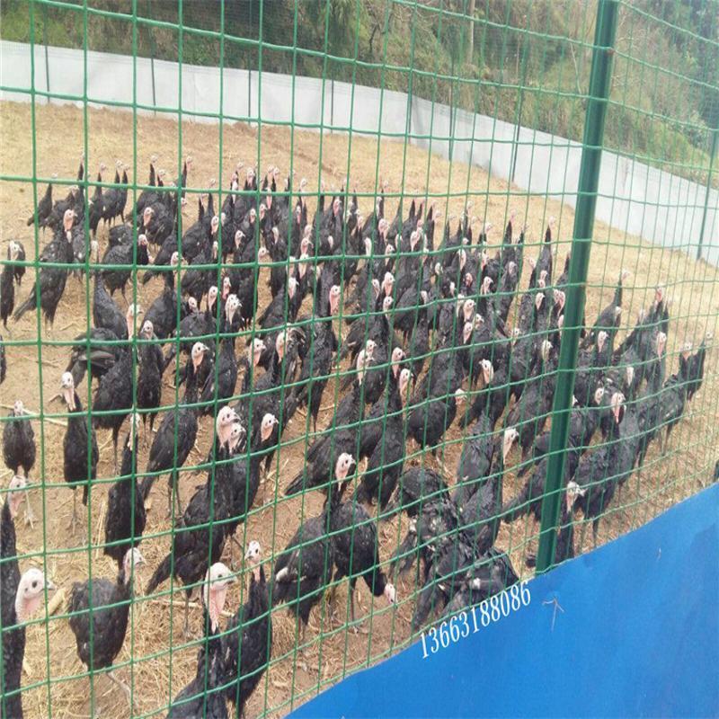批發養雞場圍欄網  浸塑鐵絲網  荷蘭網  養殖柵欄網  圈地鐵絲網