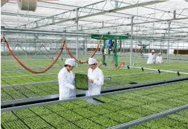 供应江苏豪达瑞科智能玻璃连栋温室