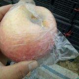 陝西紙袋紅富士蘋果今年價格走勢