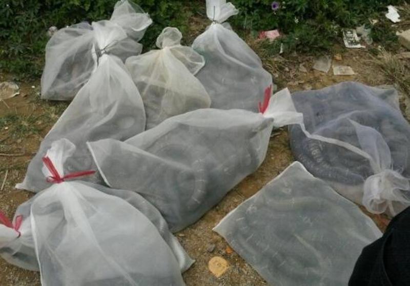 蛇袋网袋过滤袋 装鱼虾水产网袋100目高密大网袋批发
