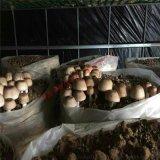 再次降低運行成本蘑菇烘乾房,高配置蘑菇烘乾設備