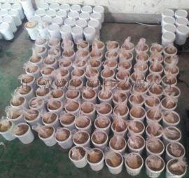高品质狗粮风味剂鸡肝粉诱食挤做好粮有天然诱食挤