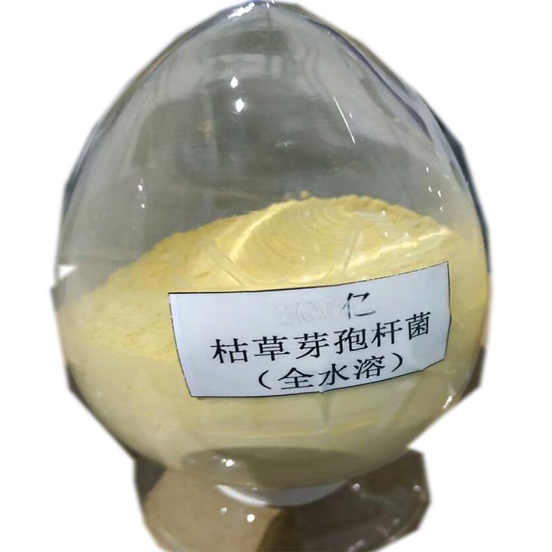 水溶肥用水溶性地衣芽孢 大姜滴灌用水溶地衣芽孢杆菌