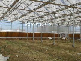 山东透明阳光板厂家,阳光板温室大棚造价,温室大棚防滴露阳光板价格