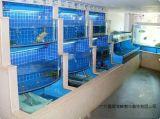 廣州花都定做玻璃海鮮魚池廣州花都定做玻璃魚缸廠家