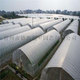 日光温室 蔬菜大棚 种植薄膜温室