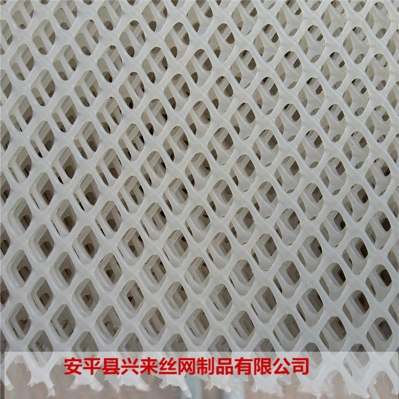 塑料網帶 水產塑料網廠家 育雛網牀製作