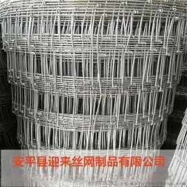 草原防护网 养殖铁丝网 镀锌牛栏网