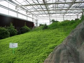 河南温室公司/郑州薄膜玻璃大棚建造/河南大棚-河南歌珊温室