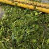 廠家改裝玉米秸稈青儲機 收集粉碎青儲黃儲設備