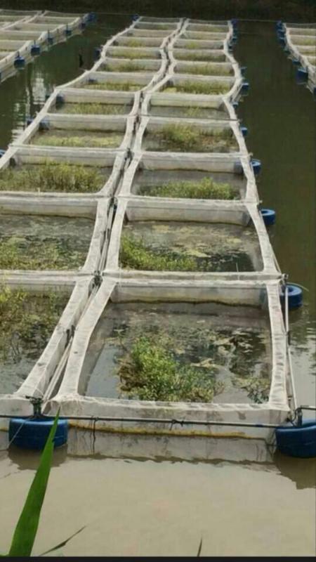 厂家  80目高密度水蛭蚂蝗防逃养殖网,蚂蝗养殖网批发