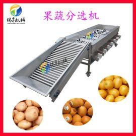水果分级机 高产量百香果分选机 柑普茶加工设备