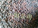 天津生物陶粒滤料生产销售及价格欢迎来电咨询