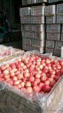 冷库铁框果蔬套袋苹果储存套袋