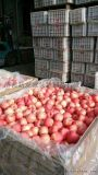 冷庫鐵框果蔬套袋蘋果儲存套袋