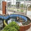 生態農場  家庭養魚種菜 魚菜共生系統