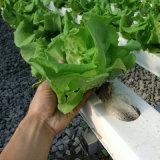 城市現代農業 大型水培溫室 蔬菜鋼架大棚