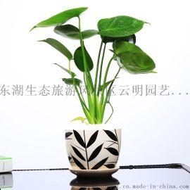 武汉小区绿化武汉花木租摆树木销售庭院别墅