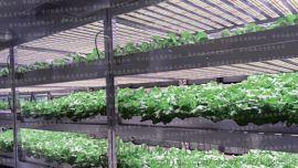 led植物灯生长灯大棚温室补光灯蔬菜花卉专用灯