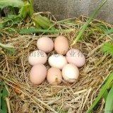 乡山纯土鸡蛋农户散养土鸡蛋纯正土鸡蛋公供货