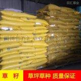边坡草籽批发价格成都护坡草种多少钱一公斤