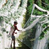 葡萄果树防鸟网池塘养殖天网尼龙防鸟网