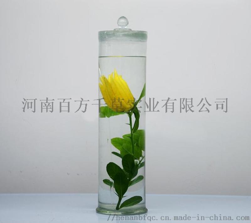 浸制标本/中药标本/植物标本