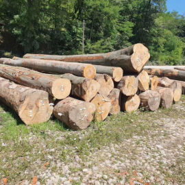 欧洲榉木原木 山毛榉 实木 板材 家居材 进口木料