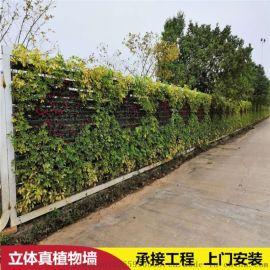 广州植物墙定制垂直绿化墙工地绿植围挡真植物墙工程