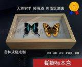 昆蟲針插標本盒/實木標本盒