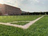 承接寧波各種學校體育運動場人工草坪