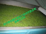 金银花烘干机,快速烘干金银花,金银花色泽碧绿