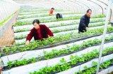 山东泽阳草莓立体种植槽低价出售