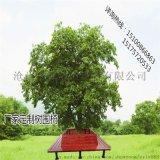 河北公園椅廠家定制防腐木樹圍椅圍樹坐凳休閒椅