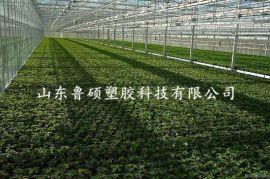 泰安岱岳区阳光板 温室大棚pc阳光板