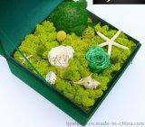 苔藓小熊保鲜永生花礼盒 超香皂花创意生日情人节圣诞教师节礼物