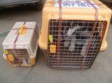 一条龙服务、上海到重庆宠物托运、上海至重庆宠物空运