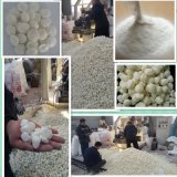 腻子粉粘合剂 玉米预糊化淀粉 木薯预糊化淀粉