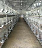 兔子养殖场厂笼具设备