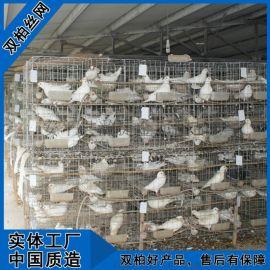 养殖鸽子镀锌铁丝网笼子大型养殖场鸽子笼