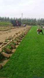 潍坊临朐草皮价格 草坪图片