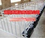 直销养猪设备厂家带食槽母猪定位栏肥猪限位栏猪舍猪场好管理大猪围栏