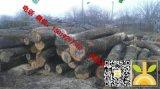 尚高木业长期供应新伐LIME LOGS/椴木原木