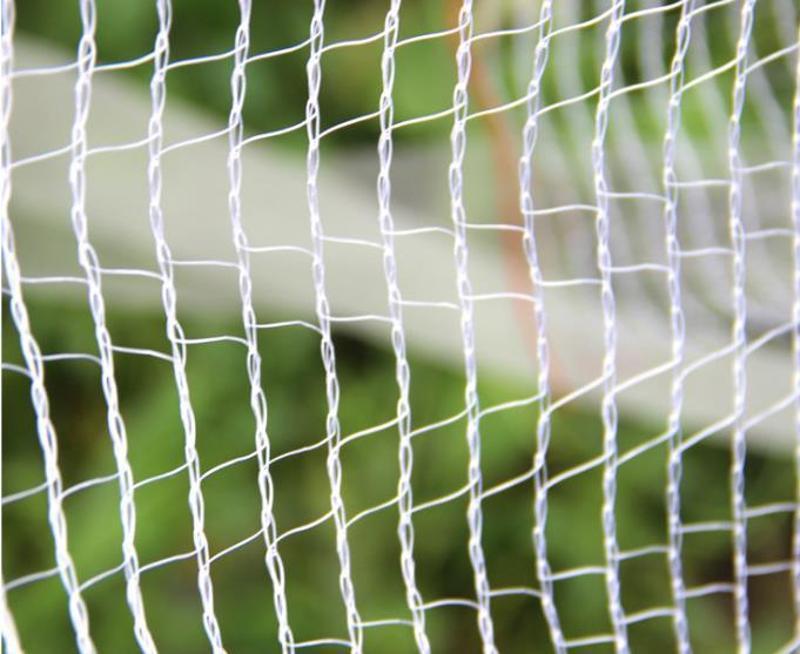农场养殖防鸟防雀网 家禽养殖网苹果树桃树防冰雹网 防鸟网