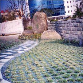HDPE塑料绿化植草格 停车厂草坪格