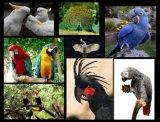 百鸟展资源租赁鸟园展览百鸟共鸣鸟语花香百鸟展