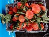 廣州江南水果市場代銷