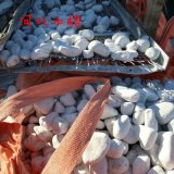 白色卵石多少錢一噸 河北石家莊白色卵石價格