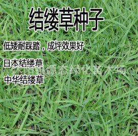 批发新中华结缕草细叶日本结缕草台湾草球场专用草草坪种子耐践踏